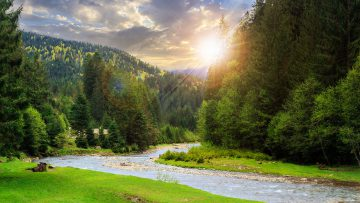 Montana landscape of mountains covered in trees and a river